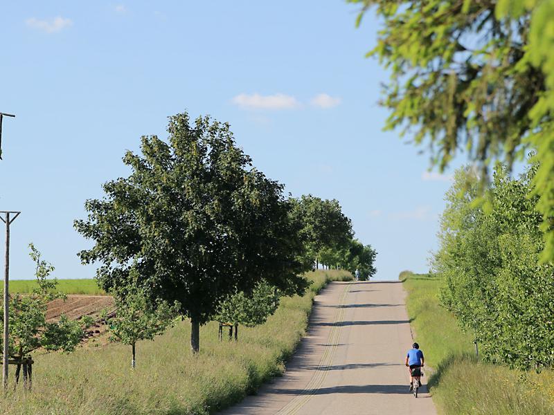 Baumreihe beim Wilhelmshof