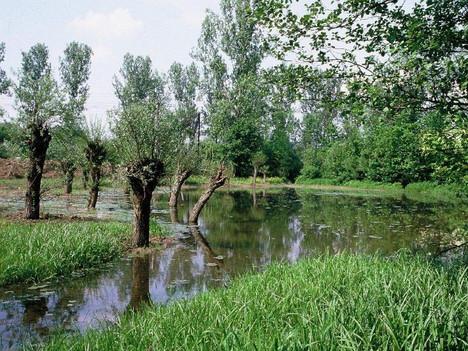 Kopfweiden am Langwiesenteich - erfolgreich von der Gemarkung Markgröningen ins Enztal verpflanzt
