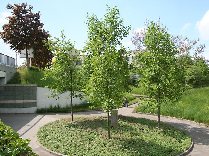 Baumrondell