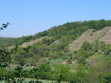 Am Brachberg zeigt sich die Landschaft struktur- und abwechslungsreich durch kleinparzellierte, vielfältige Nutzungen.