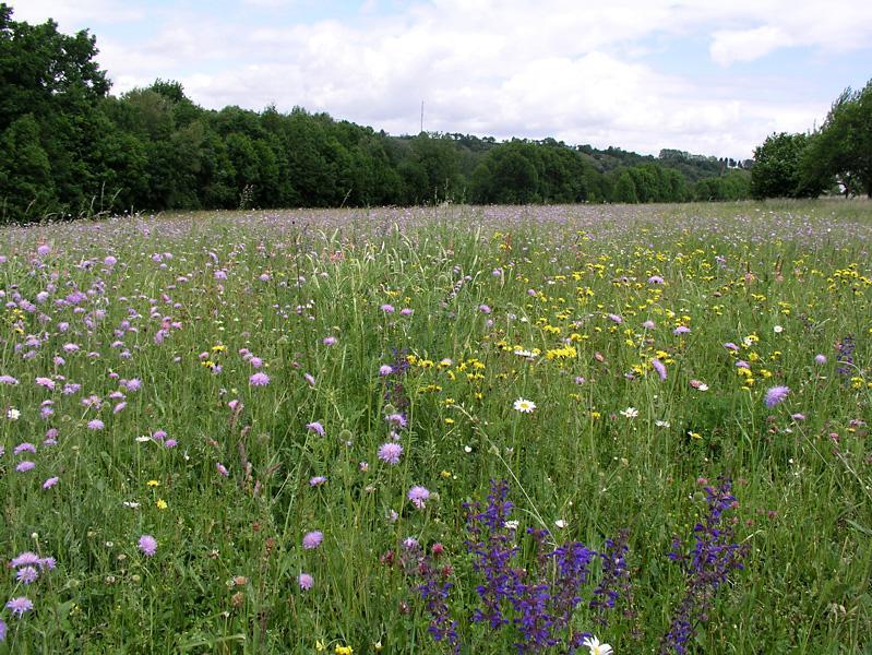 Bunte Blütenvielfalt auf einer stillgelegten Ackerfläche