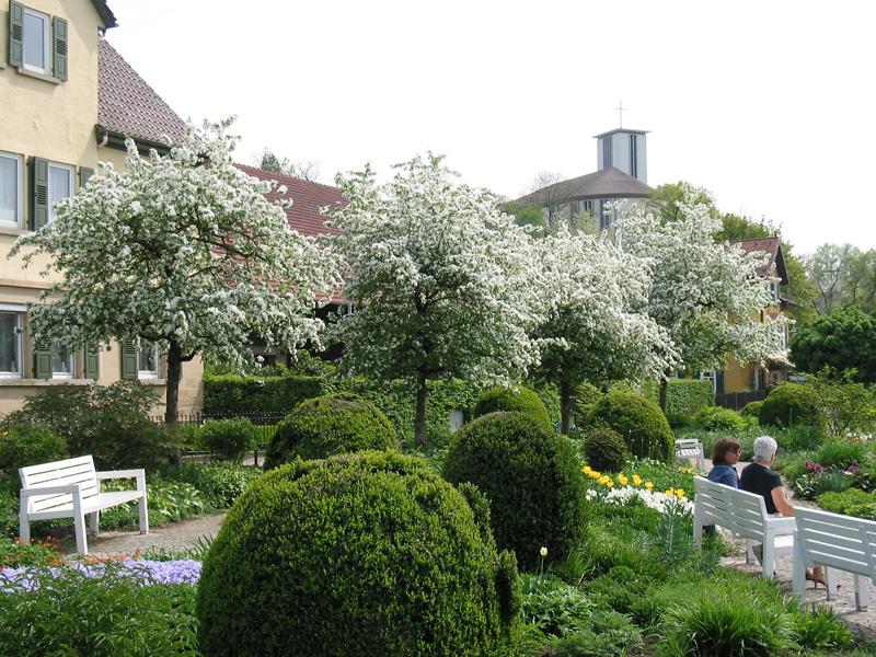 Blühende Zieräpfelbäume im Frühjahr